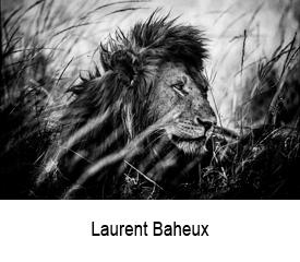 Laurent Baheux site artlabs
